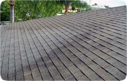 Whitby Roofing